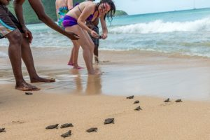 Turtles (4 of 5)